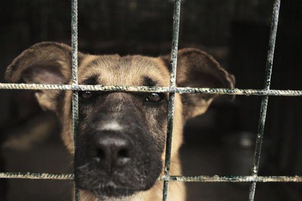 Starting a 501(c)(3) Animal Rescue | 501c3 4 U